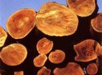Как выбрать древесину? Какой материал для чего нужен?