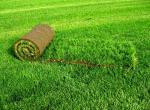 Рулонный газон – быстро и удобно