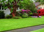 Уход за газоном весной. Проблемы и болезни